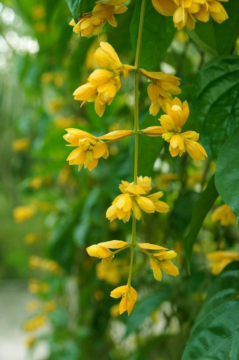 Yellow flowers bunches of free photo on pixabay yellow flowers bunches of flowers vines mightylinksfo