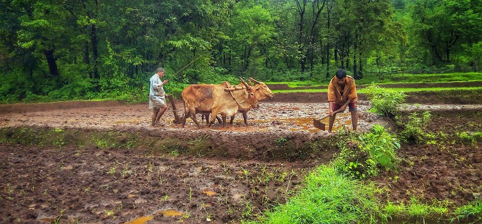 Nature, Kokan, Sindhudurg, Goa, Farmer, Green