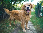 dog, happy, game