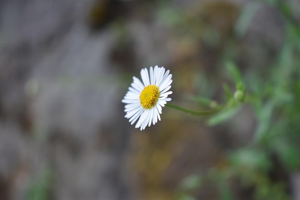 White flower wild free photo on pixabay white flower flower wild flower floral nature mightylinksfo
