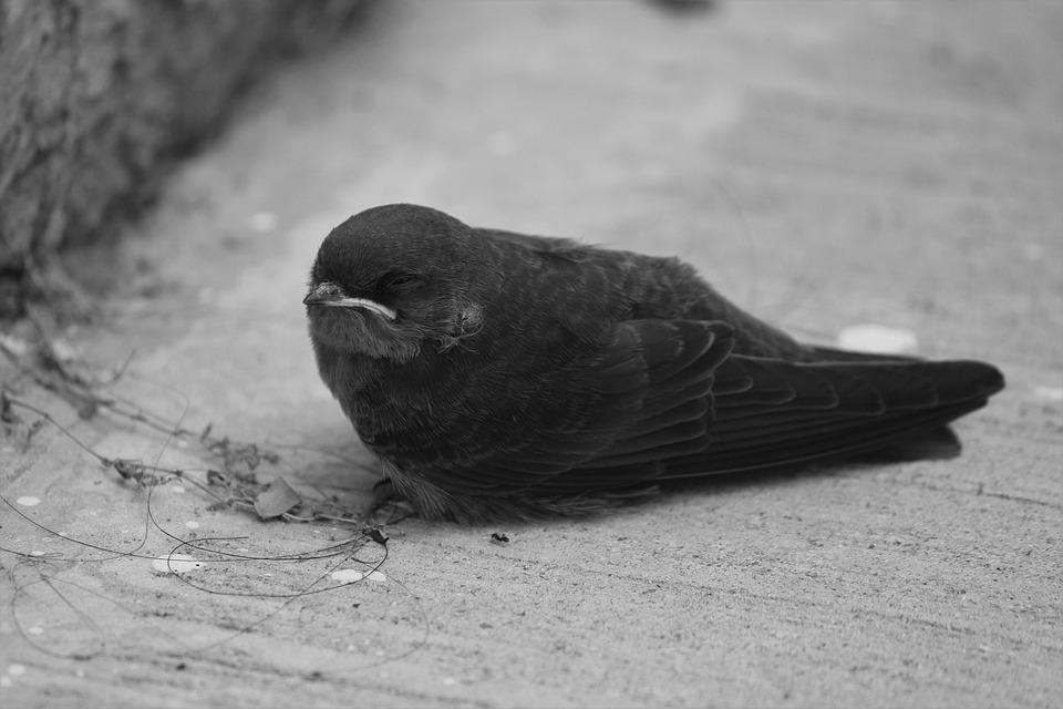 Strach z veľkého vtáka