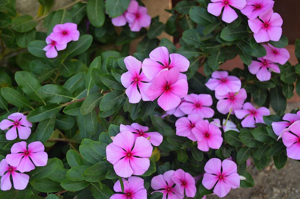 Pink Flowers Fall Flowers Garden Flowers Rosa