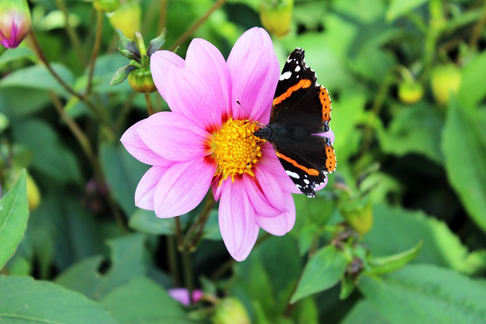 Natural Butterfly Summer Flower Insect Flowers