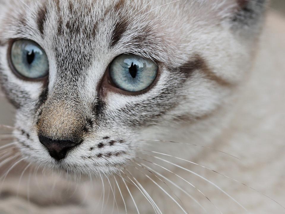 叮当猫短信