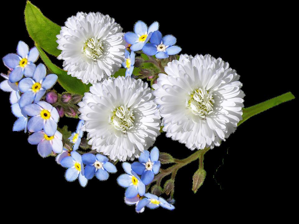 Daisy white blue free photo on pixabay daisy white blue flowers mightylinksfo