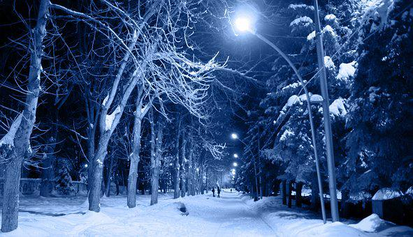 Night, Snow, Frost, Cold, Trees