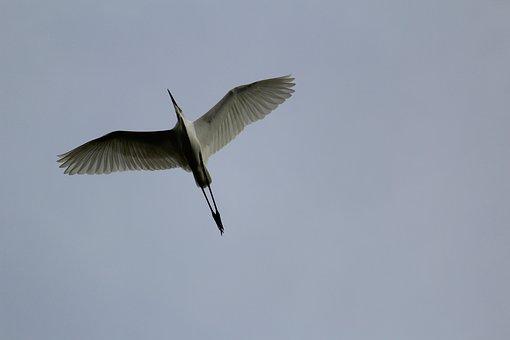 Oiseau, Mouche, Battant, Vol, Nature