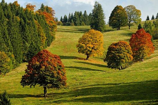 Herbst, Herbstwald, Bäume, Herbstlaub, Camping Herbolzheim