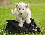 cub, baby