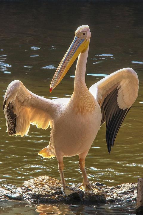 φωτογραφία του μεγάλο πουλί μεγάλα βυζιά βίντεο