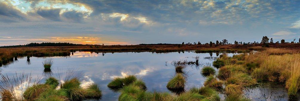 Ein tolles Buch - Der Gesang der Flusskrebse, Sumpf