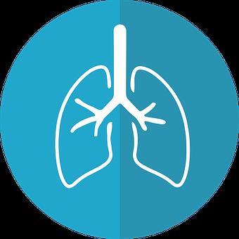 肺, 肺のアイコン, 呼吸, 解剖学, 気管支, オルガン, 医療