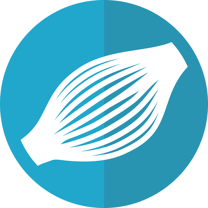 Muskel-Symbol Muskel Anatomie · Kostenlose Vektorgrafik auf Pixabay