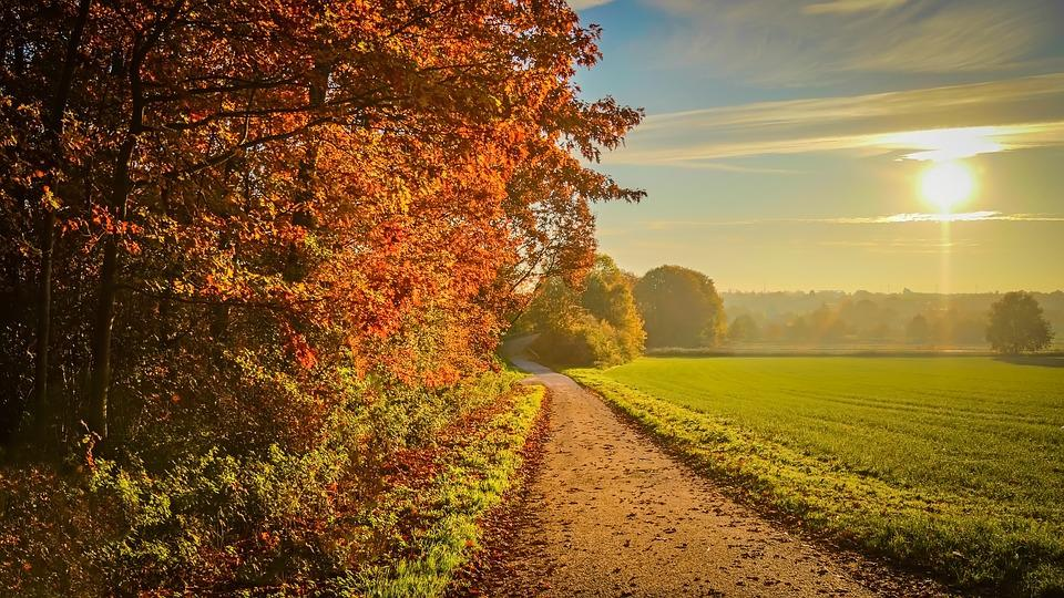 Sonnenuntergang, Herbst, Landschaft, Sonnenlicht, Laub