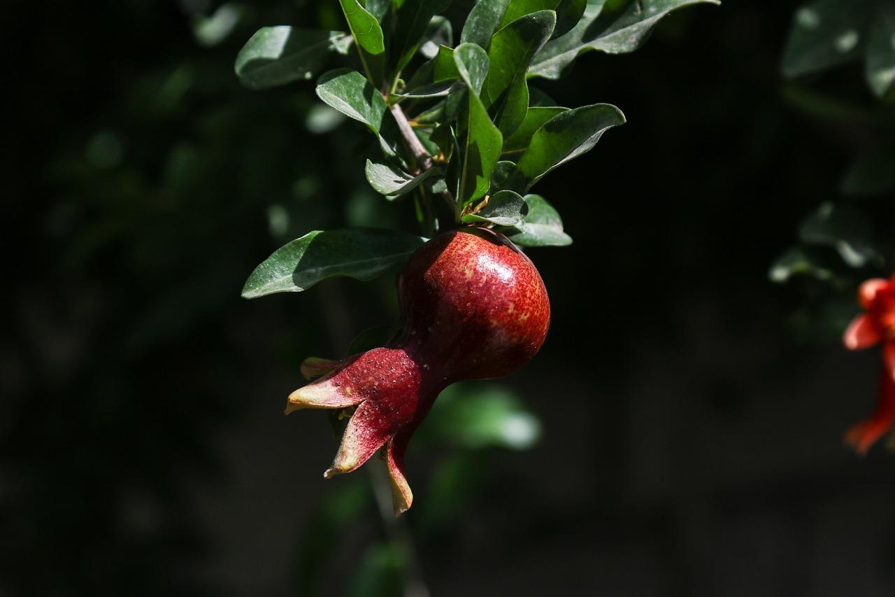 проблемы электрики картинка плоды и цветы на одном дереве жильцы
