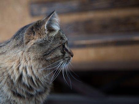 Pekná bez vlasov mačička
