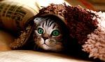 cat, blanket, hide
