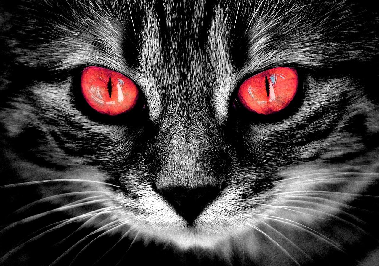 фото на аву с красными глазами пожелания