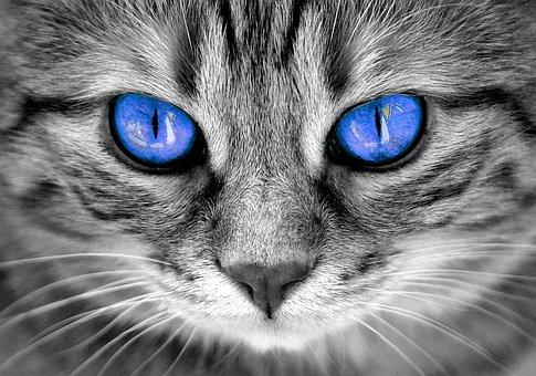 Cat, Eyes, Cat'S Eyes, Face, Tiger