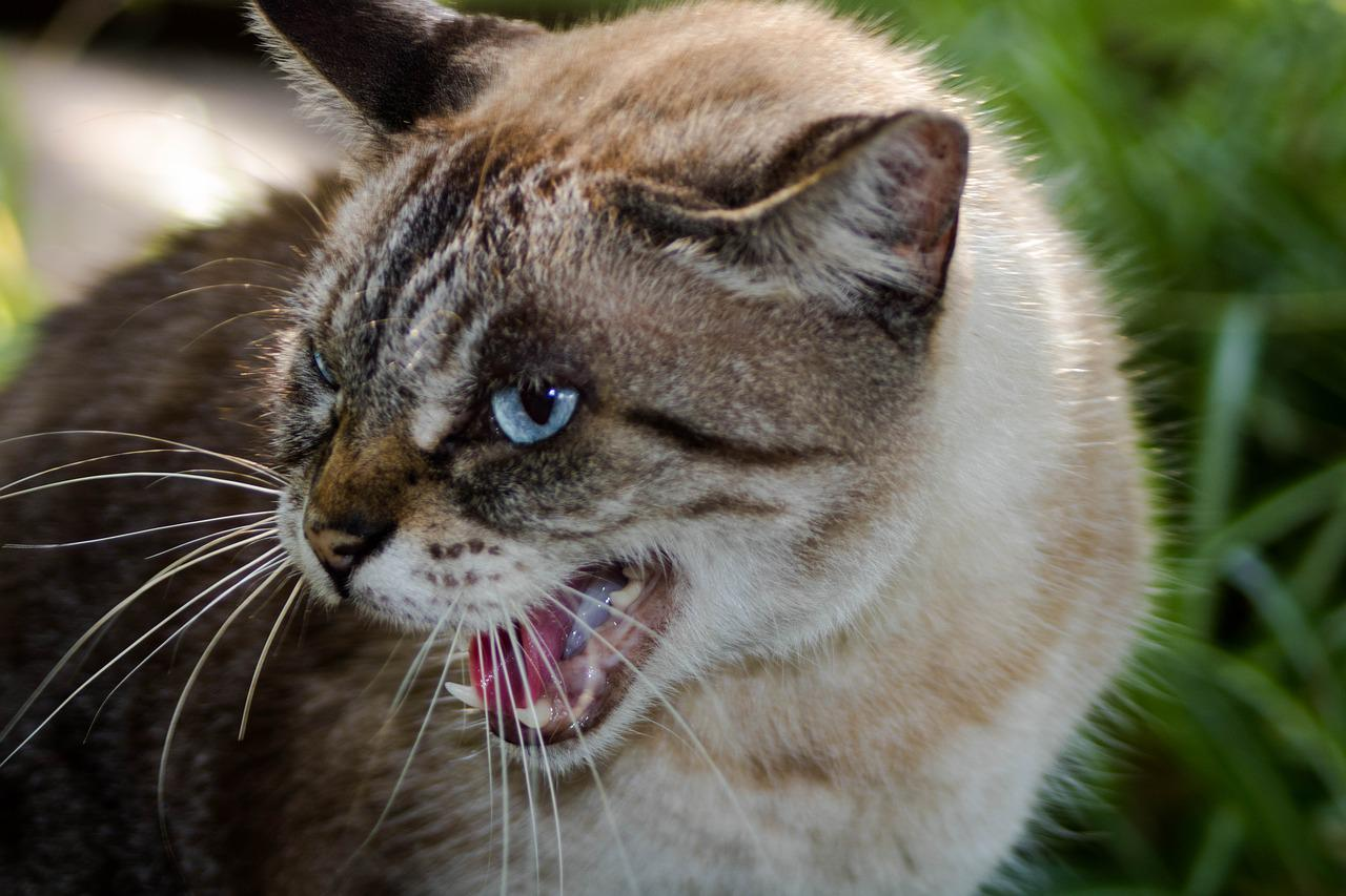 долго картинки ярости у животных цвета принты модных