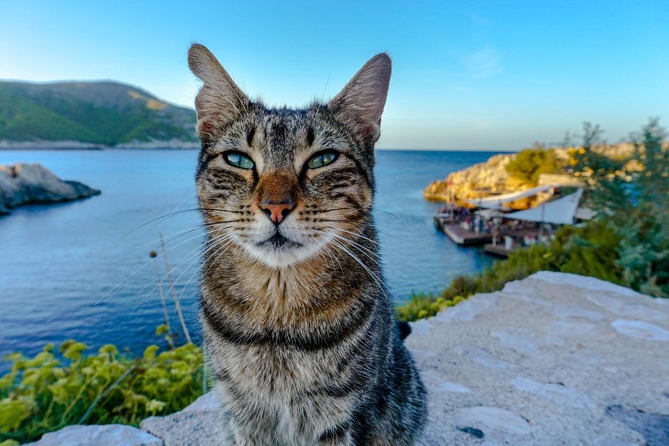 猫, 海, 马洛卡, 毛皮, 海岸, 水, 动物, 墙, 性质, 可爱, 天空, 气氛