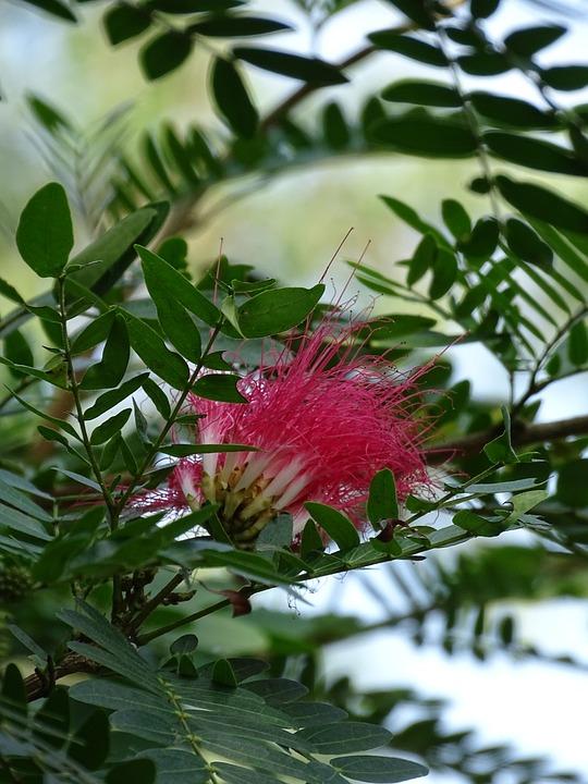 ebee5a0a54bf Príroda Krásna Prírodné - Fotografia zdarma na Pixabay