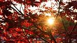 autumn, sun, evening