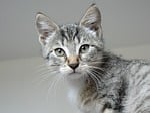 animals, kitten, cat