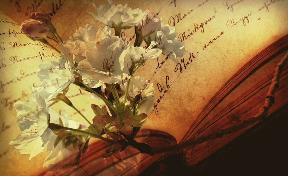 Book, Font, Old Book, Still Life, Flowering Twig