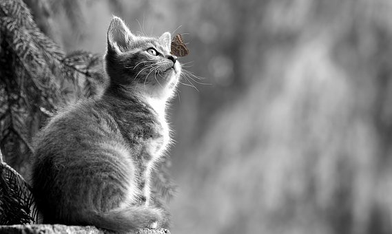 Katze, Katzenjunges, Schmetterling