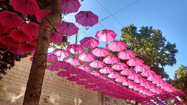 Rosa, Parrapluie, Regenschirm, Umbrella