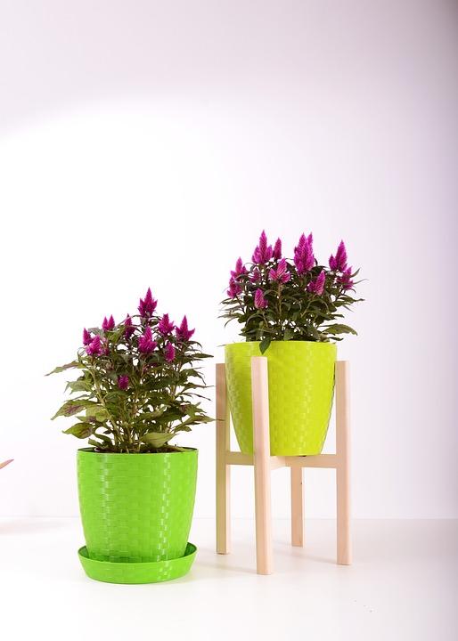 Plante Ghiveci De Flori Plastic Fotografie Gratuită Pe Pixabay