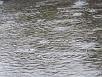 rain, thunderstorm, raindrop