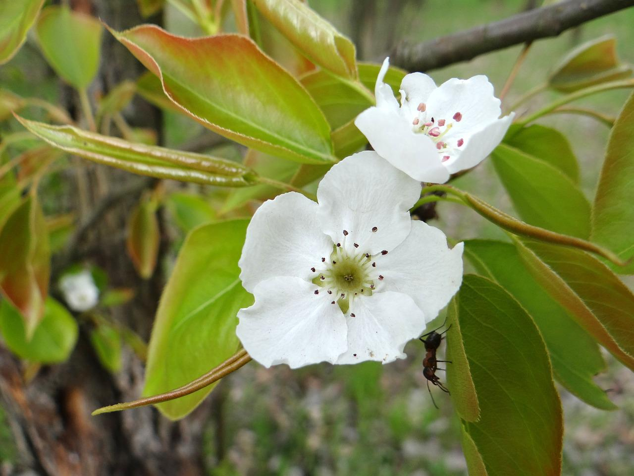 Что посадить на 6 сотках: деревья, растения, кустарники и цветы 59