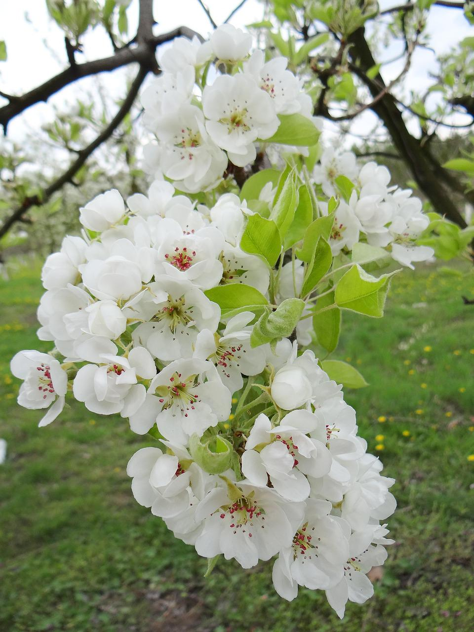 Что посадить на 6 сотках: деревья, растения, кустарники и цветы 78