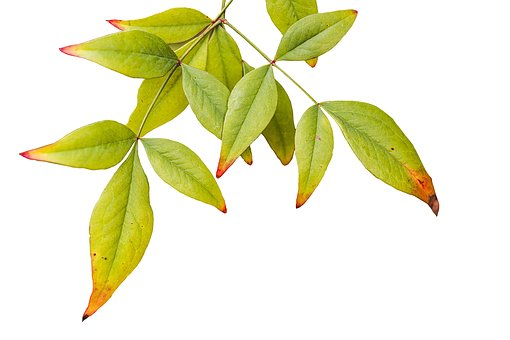 Leaves, Foliage, Nature, Leaf