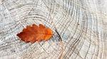 jesienią, spadek liści, liść dębu