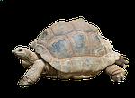 turtle, tortoise, reptile