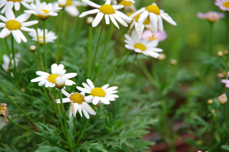 Small white flowers xianfeng grass free photo on pixabay small white flowers xianfeng grass garden corner mightylinksfo