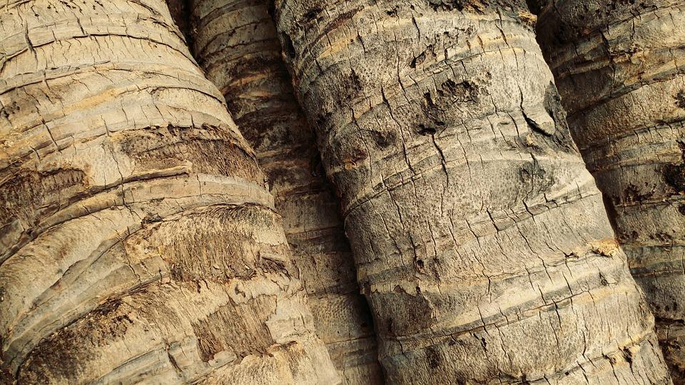 Lumber Ty 2 Secret Island Palm Tree