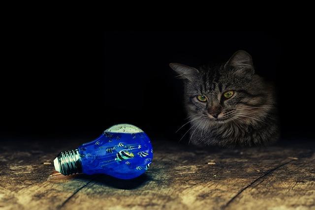 Light Bulb Cat Fish Table 183 Free Photo On Pixabay