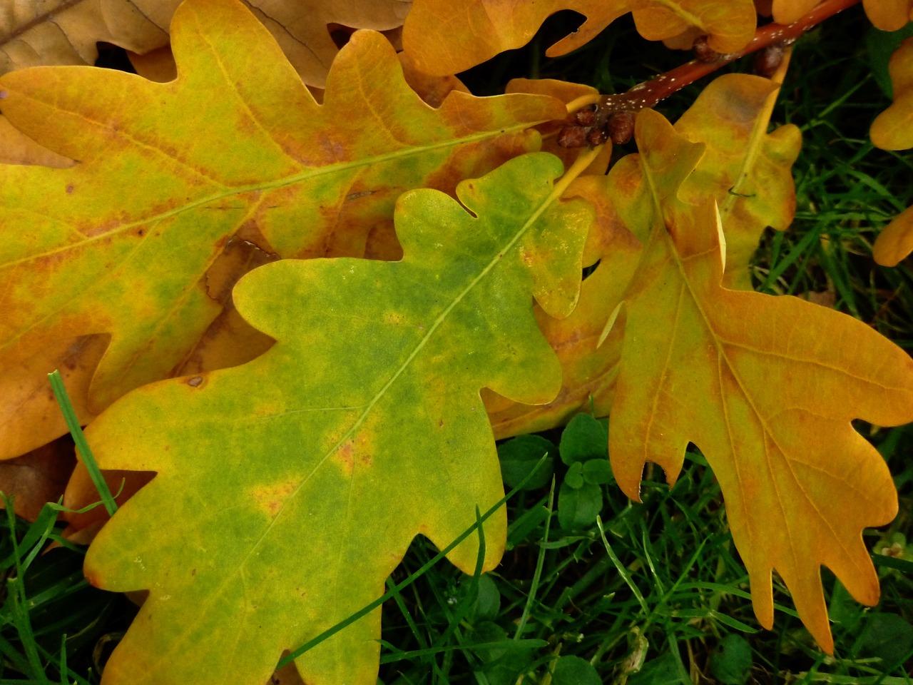 Правила фотографирования через листву стремятся