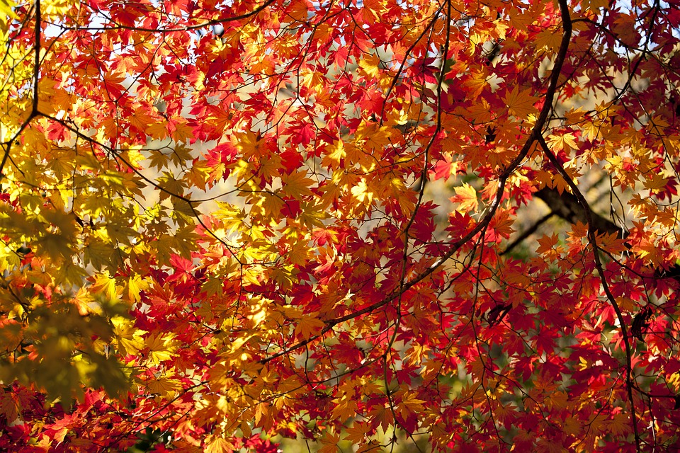 Feuilles d 39 automne photo gratuite sur pixabay - Image feuille automne ...
