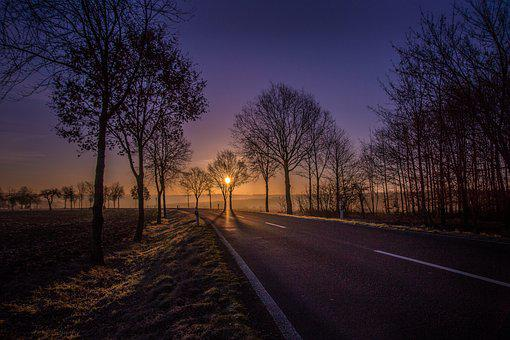 Road, Sunrise, Trees, Avenue, Yellow
