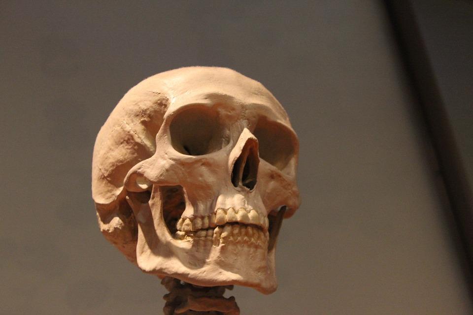 Skull Skeleton Head · Free photo on Pixabay