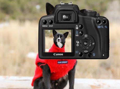 Camera, Dog, Photo, Image, Exposure