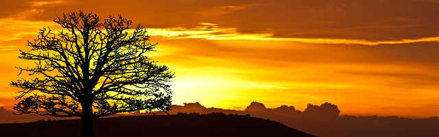 sunrise tree nature free photo on pixabay