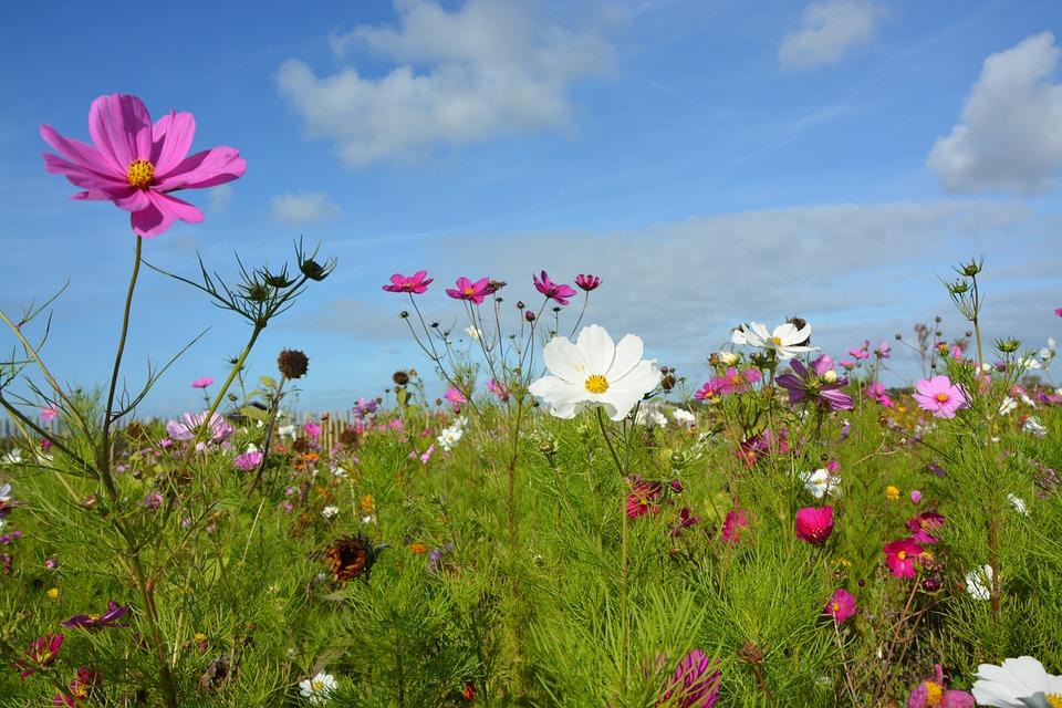 Blumen Landhausstil blumen essbereich im landhausstil kostenloses foto auf pixabay