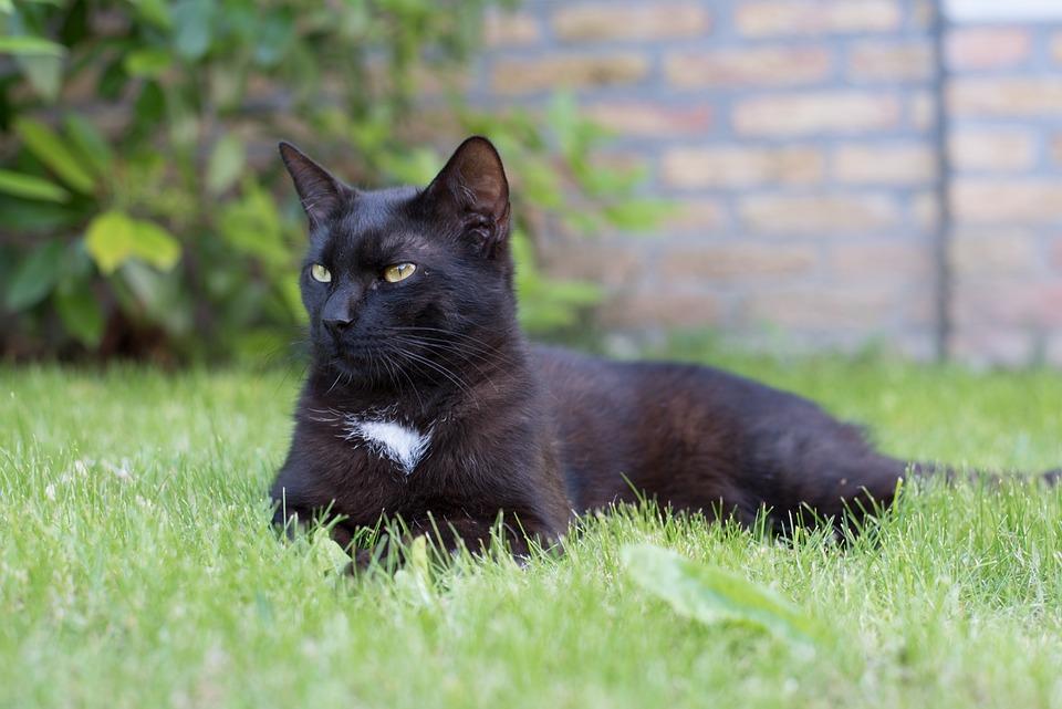 Sledujte zadarmo čierna mačička