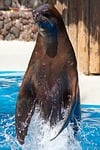 seal, jump, feat